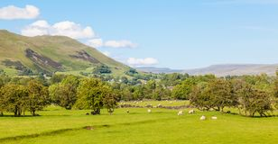 Yorkshire Dales Agricultural Landscape. English agricultural landscape in the Yorkshire Dales with trees, sheep and stone walls Stock Photo