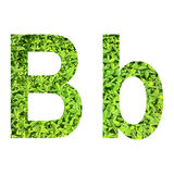 """English alphabet """"B.b"""" made from green grass on white background for isolated Royalty Free Stock Photography"""