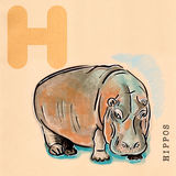 English alphabet , Hippos Stock Image