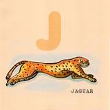 English alphabet , Jaguar. Hand drawn animal for English alphabet , Jaguar royalty free illustration
