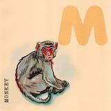 English alphabet,  Monkey. Hand drawn animal for English alphabet,  Monkey Stock Image