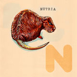 English alphabet , Nutria Stock Images