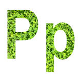 """English alphabet """"P.p"""" made from green grass on white background for isolated Stock Photography"""