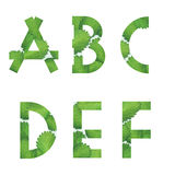 English alphabet. From strawberry leaf. on white background. Alphabet letters Stock Photography