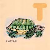 English alphabet , Turtle. Hand drawn animal for English alphabet , Turtle stock illustration