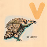 English alphabet , Vulture vector illustration