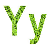 """English alphabet """"Y.y"""" made from green grass on white background for isolated Stock Image"""