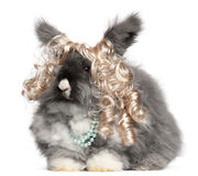 English Angora rabbit wearing wig and pearls. In front of white background royalty free stock images