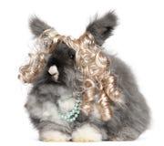 English Angora rabbit wearing wig and pearls Royalty Free Stock Images