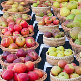 English apples on show in autumn Stock Image