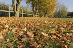 English Autumn Stock Photos