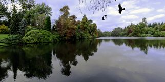 English autumn with flying birds - United Kingdom Stock Images