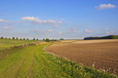 English autumn scene. A scenic grassy bridleway in an agricultural landscape with hills and hedgerows under a blue sky in autumn in the yorkshire wolds england Royalty Free Stock Image