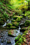 English Babbling Brook. Long exposure deep in the Forests of Northern England during Autumn royalty free stock photo