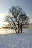 English Bay at Dusk. This image was taken In Vancouver, Canada's Stanly Park during a snowfall Royalty Free Stock Images