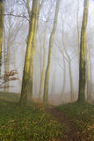 English beach woodland on a misty morning Royalty Free Stock Image