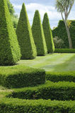 English boxwood garden design Stock Images