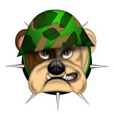 English Bull Dog Head with Army Helmet Royalty Free Stock Image
