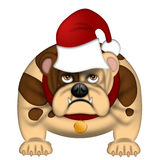English Bull Dog with Santa Hat Isolated on White Royalty Free Stock Image