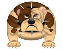 English Bull Dog Spike Collar Isolated on White. English Bull Dog Fierce With Spike Collar Isolated on White Illustration Stock Image