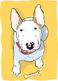 English bull terrier. An illustration of a English bull terrier with a bone in front Stock Images
