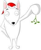 English bull terrier mistletoe Royalty Free Stock Image