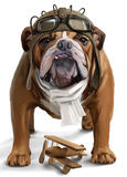 English bulldog Aviator watercolor painting royalty free illustration