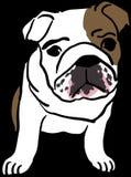 English, Bulldog, Baby, Mammal Stock Image