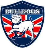 English bulldog British Flag Royalty Free Stock Image