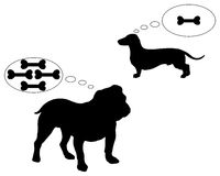 English bulldog and dachshund. Dream of bones Stock Photography