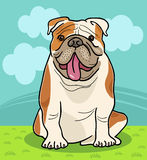 English bulldog dog cartoon illustration Royalty Free Stock Images
