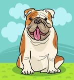 English bulldog dog cartoon illustration Royalty Free Stock Images
