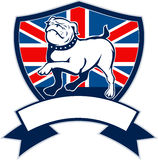 English bulldog Great Britain flag. Illustration of a Proud English bulldog marching with Great Britain or British flag in background set inside a shield with