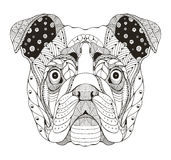 English bulldog head zentangle stylized, vector, illustration, f Royalty Free Stock Photography