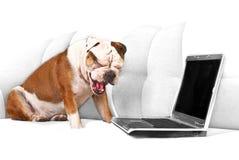 English bulldog with notebook Royalty Free Stock Photography