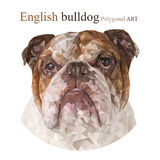 English bulldog. Polygonal drawing. Royalty Free Stock Photography