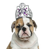 English bulldog puppy wearing a diadem in front of white backgro Royalty Free Stock Photos