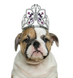 English bulldog puppy wearing a diadem in front of white backgro Stock Photo