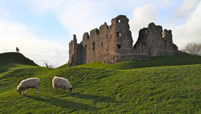 English castle ruins Royalty Free Stock Photos