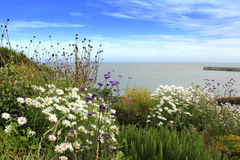 English Channel coast viewpoint Kent UK. Beautiful margaritas flowers at the clifftop viewpoint overlooking Folkestone Harbour and English Channel Kent UK Stock Photo