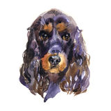 English cocker spaniel. Animal, dog. Watercolor illustration isolated on white background Royalty Free Stock Photography
