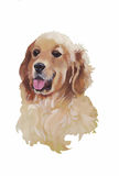 English cocker spaniel Animal dog watercolor illustration isolated on white background vector Royalty Free Stock Photo