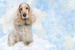 English cocker spaniel dog on christmas Stock Photos