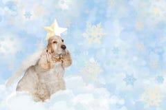 English cocker spaniel dog on christmas Royalty Free Stock Image