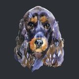 English Cocker spaniel watercolor hand draw on black background. Royalty Free Stock Images