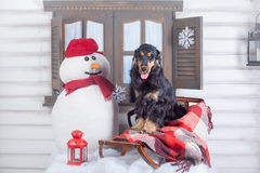 English cocker spaniel with winter decoration Stock Images