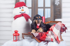 English cocker spaniel with winter decoration Royalty Free Stock Photo
