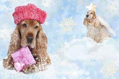English cockerspaniel with shopping gift and angel Royalty Free Stock Image