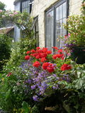 English Cottage Garden. Flowers growing against the front wall of a traditional English country cottage Royalty Free Stock Image