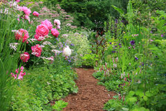 English cottage garden. Pretty path in an english cottage garden Stock Image